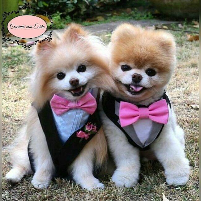 Pajens mais que especiais e esbanjando fofura! Boa noite para todos. Um bom fim de semana.  #casandocomestilow#cuteness#babydog #instapet#bebe#fofura#fofurice#amormeu#lovemydog#muitoamor#dogkisses#postpet#amomuito#mydog#mydogiscutest#filhode4patas#boanoitee#goodnightworld#amocachorro#maedecachorro #Alamango #Bridal #Textiles #Wedding #AlamangoBridal #AlamangoTextiles #Malta #LoveMalta #Bridesmaid #WeddingDress