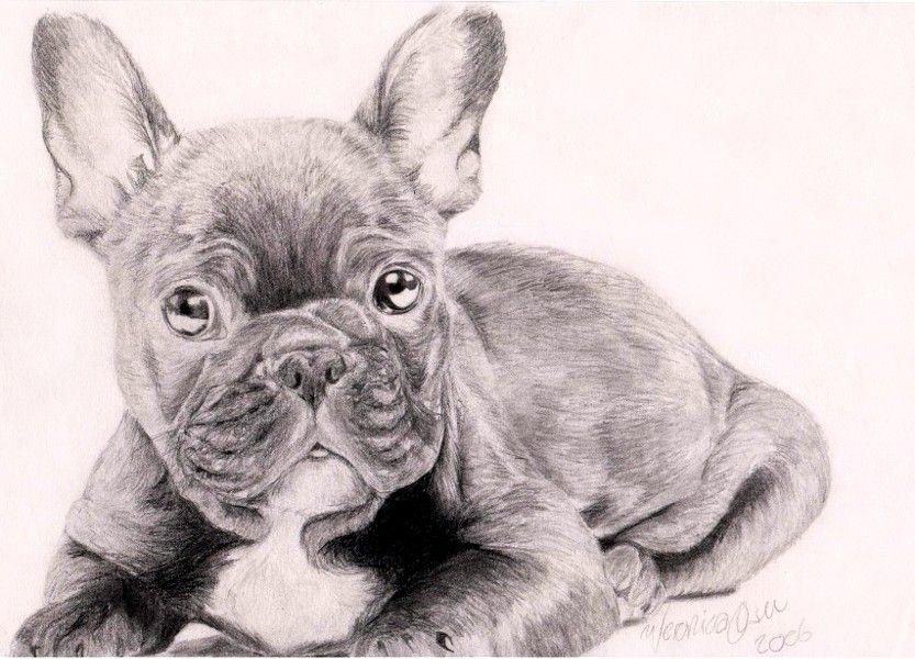 French Bulldog By Venilia Deviantart Com On Deviantart French Bulldog French Bulldog Drawing Bulldog