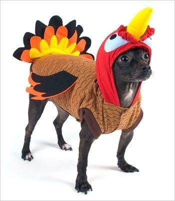 36 Dogs in Thanksgiving Costumes