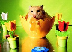 I like the slotted tulips