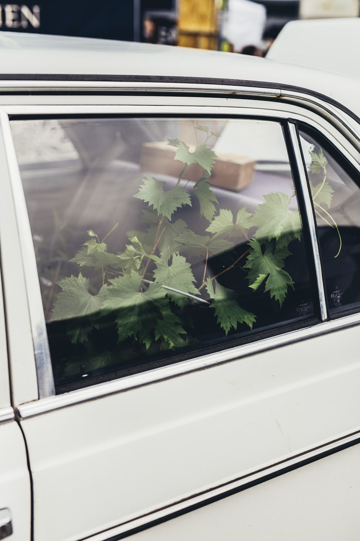 Københavnernes Plantemarked // Kødbyens Mad & Marked - April — ARA. New Media | Andreas Raun Arneberg Fotograf i københavn, Photography - god og billig - Social Media - @andreas.raun