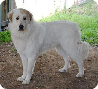 Pin On Pyrs To You