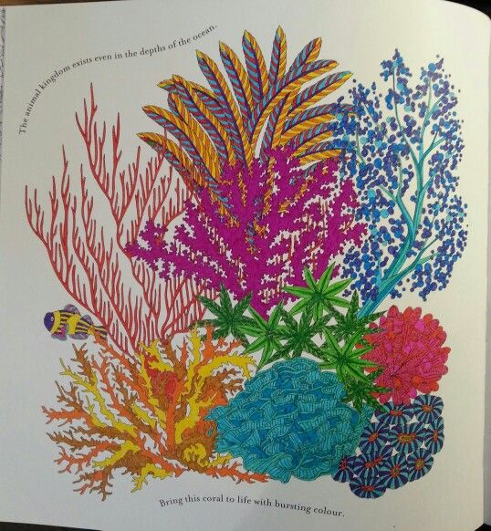 Coral From Millie Marottas Animal Kingdom Coloring BooksAdult