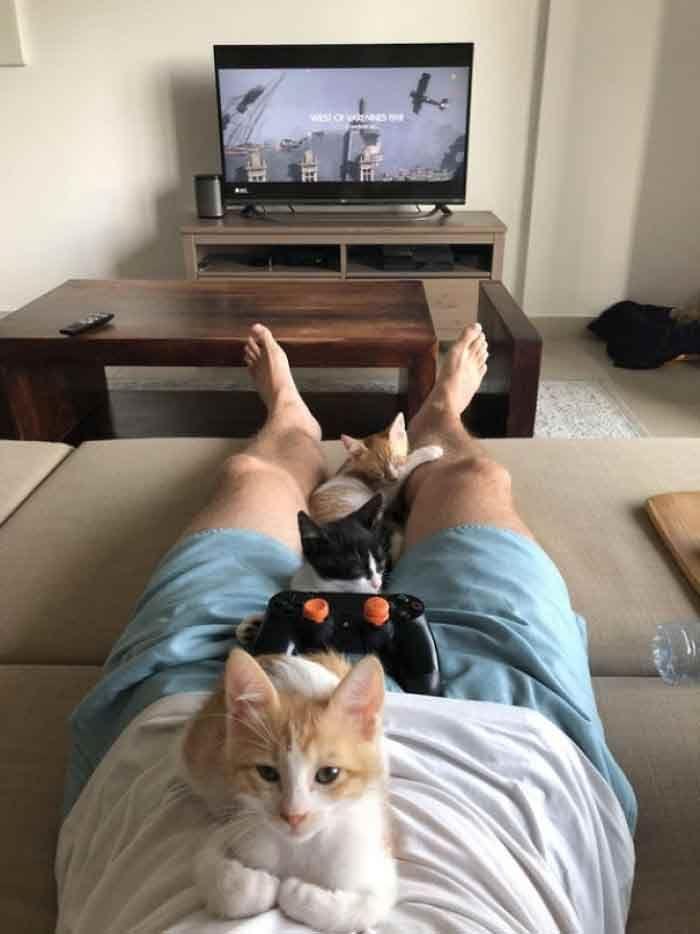 15 Times Cats Left Us Feline Fine Cute Cats Cute Animals Kittens