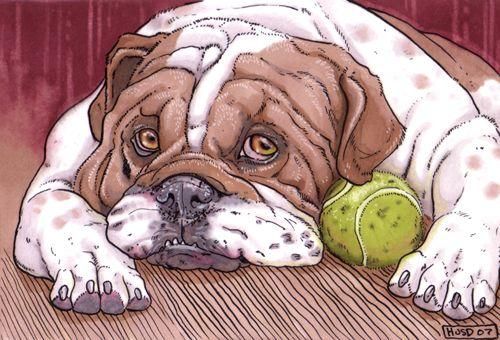 ACEO English Bulldog by Ahkahna.deviantart.com on @deviantART