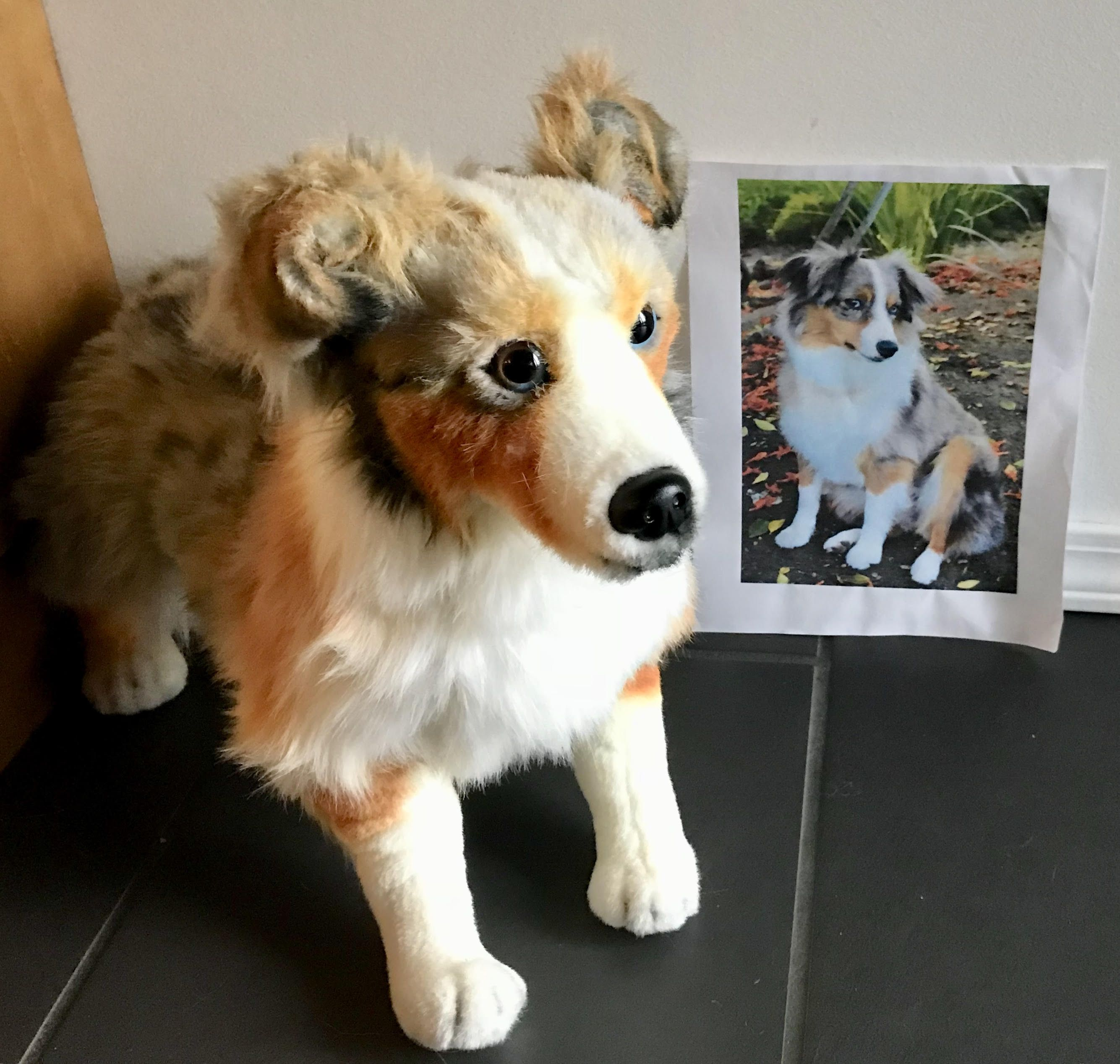 37c05630dc8f Custom Australian Shepherd Stuffed Animal | Get a Custom Animal of Your Pet  | Turn your pet into a stuffed animal | Clone your Pet | Custom Plush |  Custom ...
