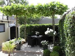 platanen dakplantanen tuin pinterest gardens garden ideas and tuin. Black Bedroom Furniture Sets. Home Design Ideas