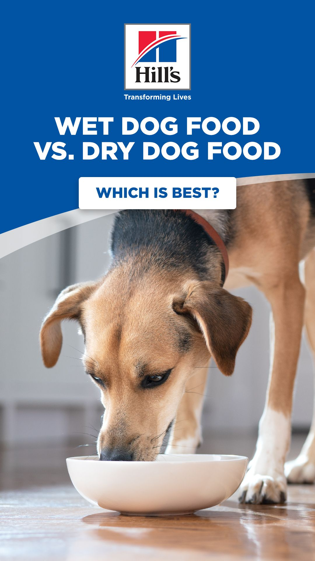 Should I Buy Wet Or Dry Dog Food For My Dog In 2020 Dog Food