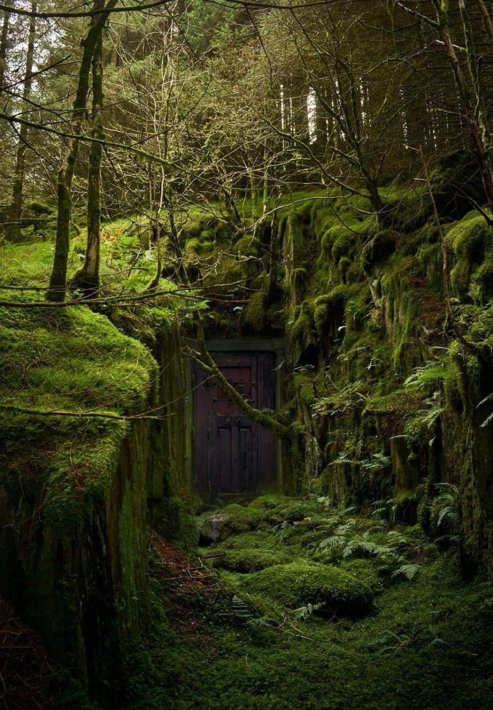 hidden door forest