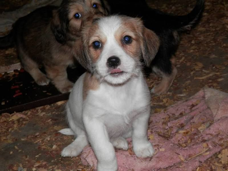 This Darling Pup Is Being Fostered In Indiana And Is Awaiting A