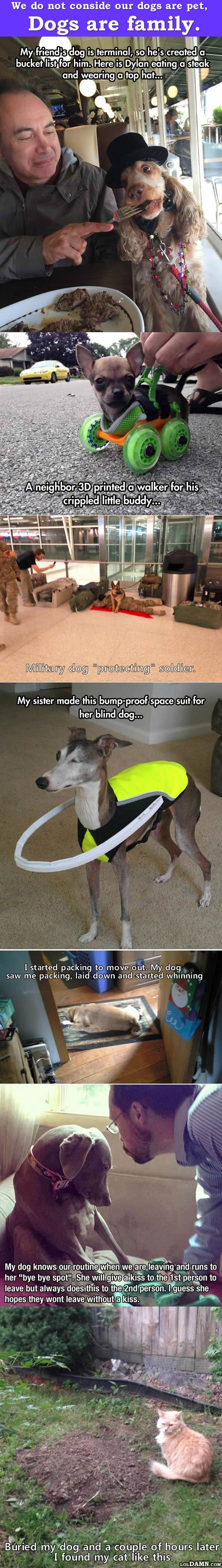 dogs are family.   animals   pinterest   pet dogs, dog and animal