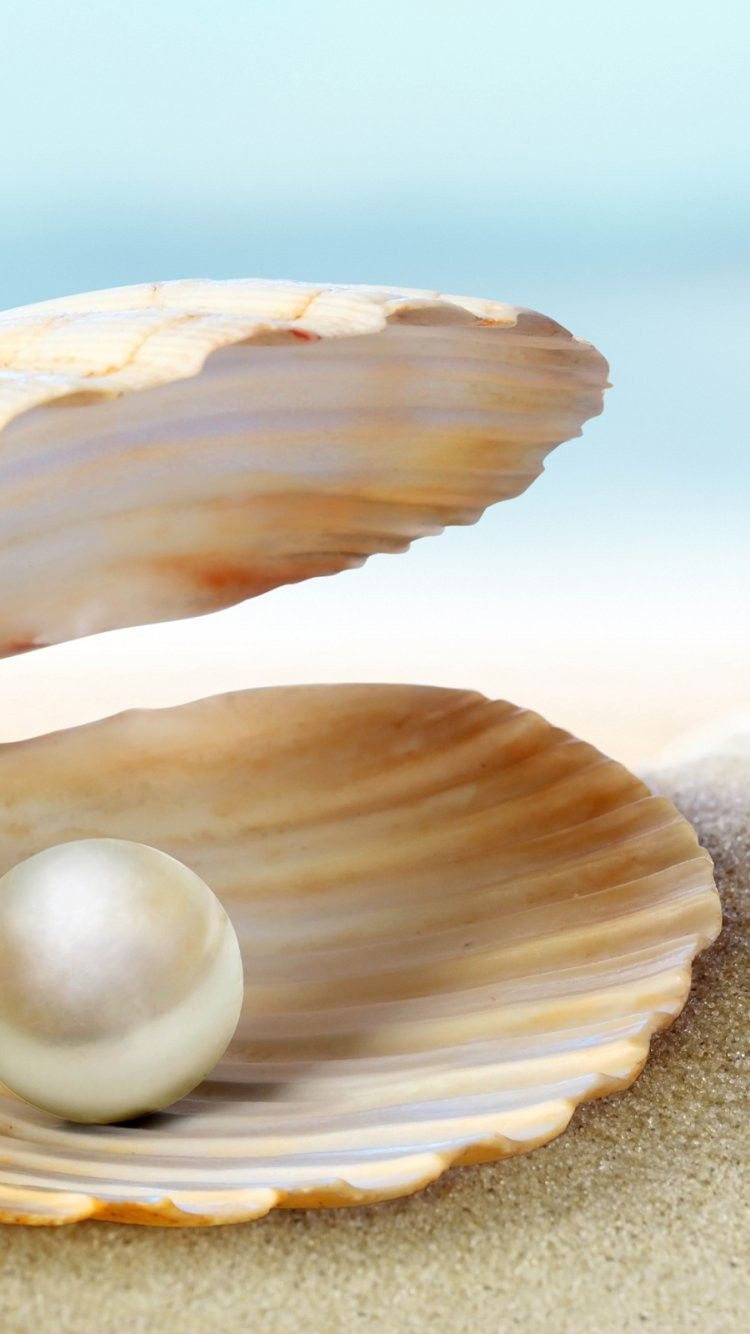 Shell Iphone 6 Wallpaper 34303 Beach Iphone 6 Wallpapers Pearls Oysters Chinese Beauty