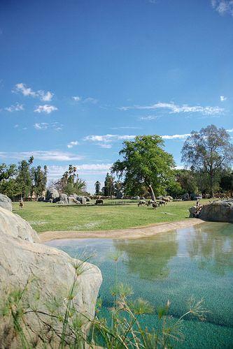 African Adventure Fresno Zoo California Location Zoo Park