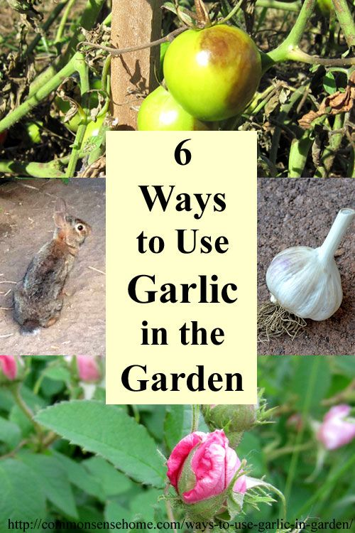 6 Ways To Use Garlic In The Garden And Yard Planting Garlic Planting And Garlic