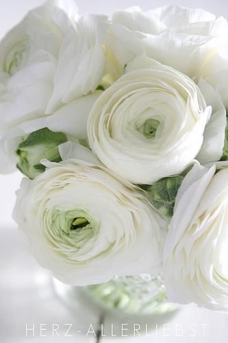 Ranunculus White Some Of My New Favorites Les Fleurs