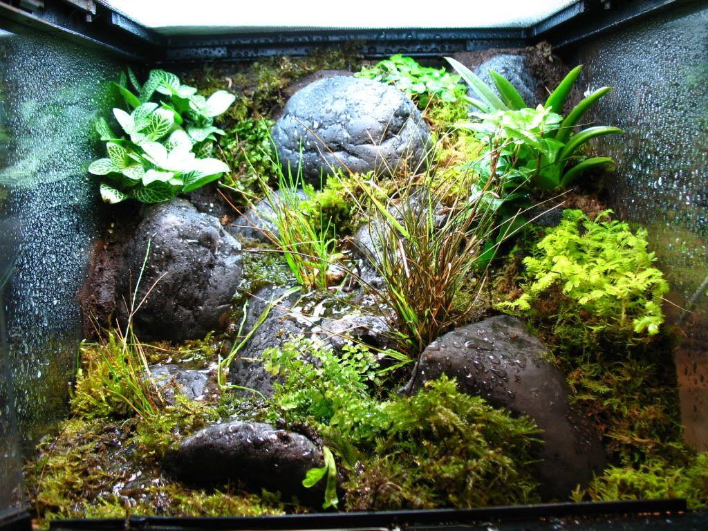 Pin by april grigsby on vivariums pinterest vivarium terraria