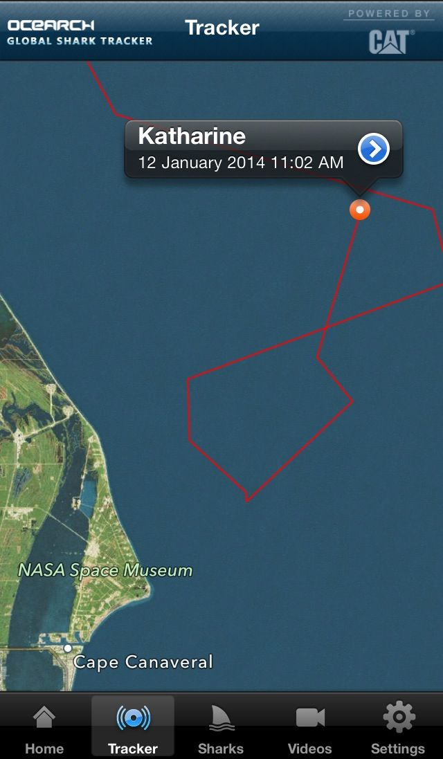 Katharine a 14ft+ white shark is off the east coast of