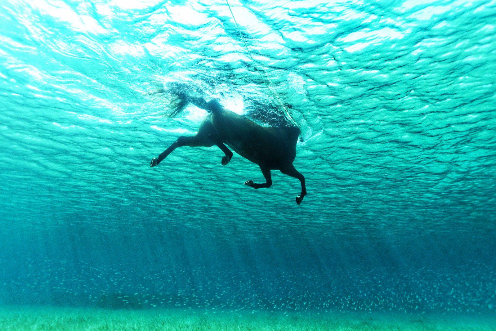 L Image De La Semaine L Incroyable Galopee Aquatique D Un Cheval Cheval Galop Photos De Chevaux Image Cheval