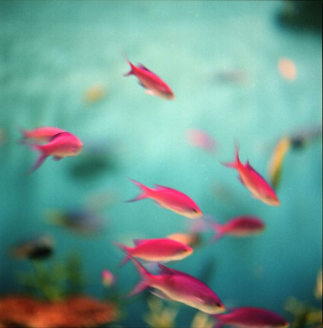 Colorful Pink Fish Color Pretty In Pink