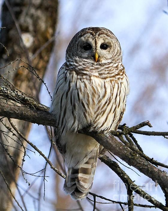 In The Morning Light By Heather King In 2020 Owl Photos Beautiful Birds Pet Birds