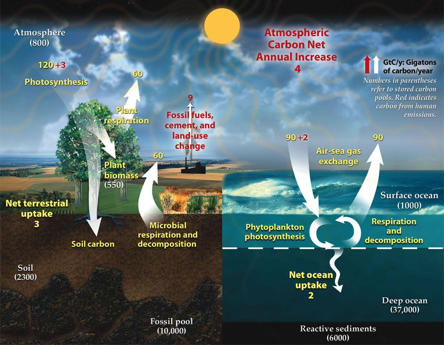Carbon Cycle Diagram From Us Dept Of Energy With Numerical Values For Sizes Of Flows And Reservoirs Shown Carbon Cycle Earth Atmosphere Nasa Earth