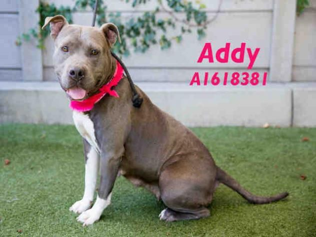 ADDY URGENT located at CITY OF LOS ANGELES SOUTH LA