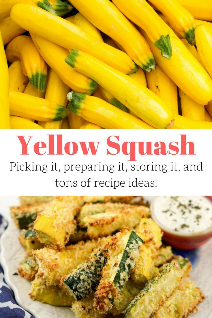 Yellow Squash Why You Should Start Eating This Veggie Now