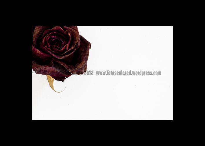 Flores 24E