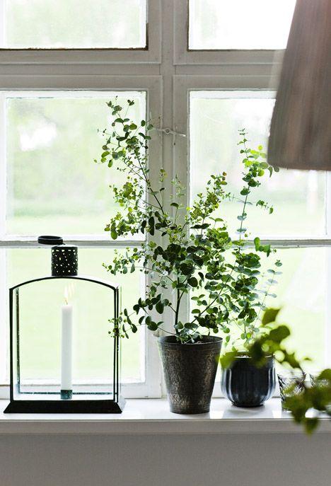 växter i fönster