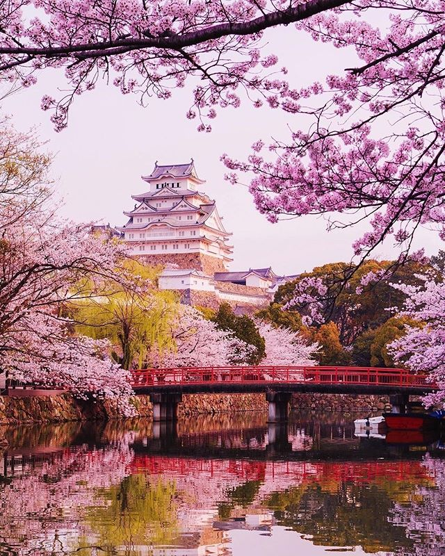 Explore Tokyo Tankensurutokyo Instagram Photos And Videos Cherry Blossom Wallpaper Sakura Tree Japanese Cherry Blossom