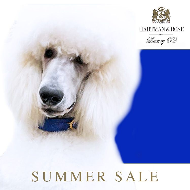 World's Finest Dog Collars & Leads SAVE 30% use code: CHRISTMAS.  www.hartmanandrose.com  @hartmanandrose #hartmanandrose @duke_thepoodle.   Love Your Dog. Spread the Love ❤️ Duke the gorgeous Standard Poodle from Australia is wearing the Estate collar in cobalt blue. Ooh la la...