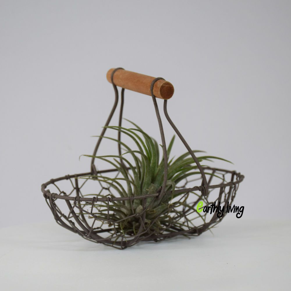 Wire Iron Cactus Tillandsias Air Plant Basket Planter Stand Green ...