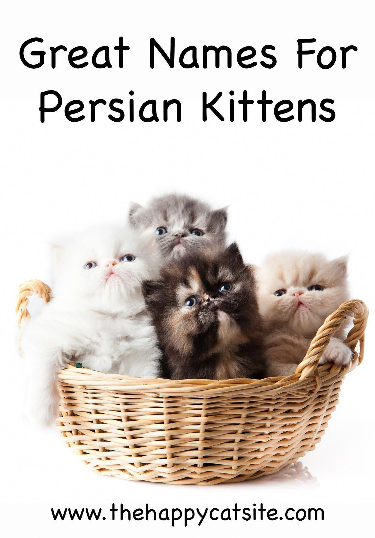 persian cat names great names for your cat. aboutcat