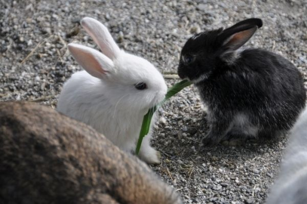 They Share with Their Buddies | 18 More Surprising Things That Bunnies Do