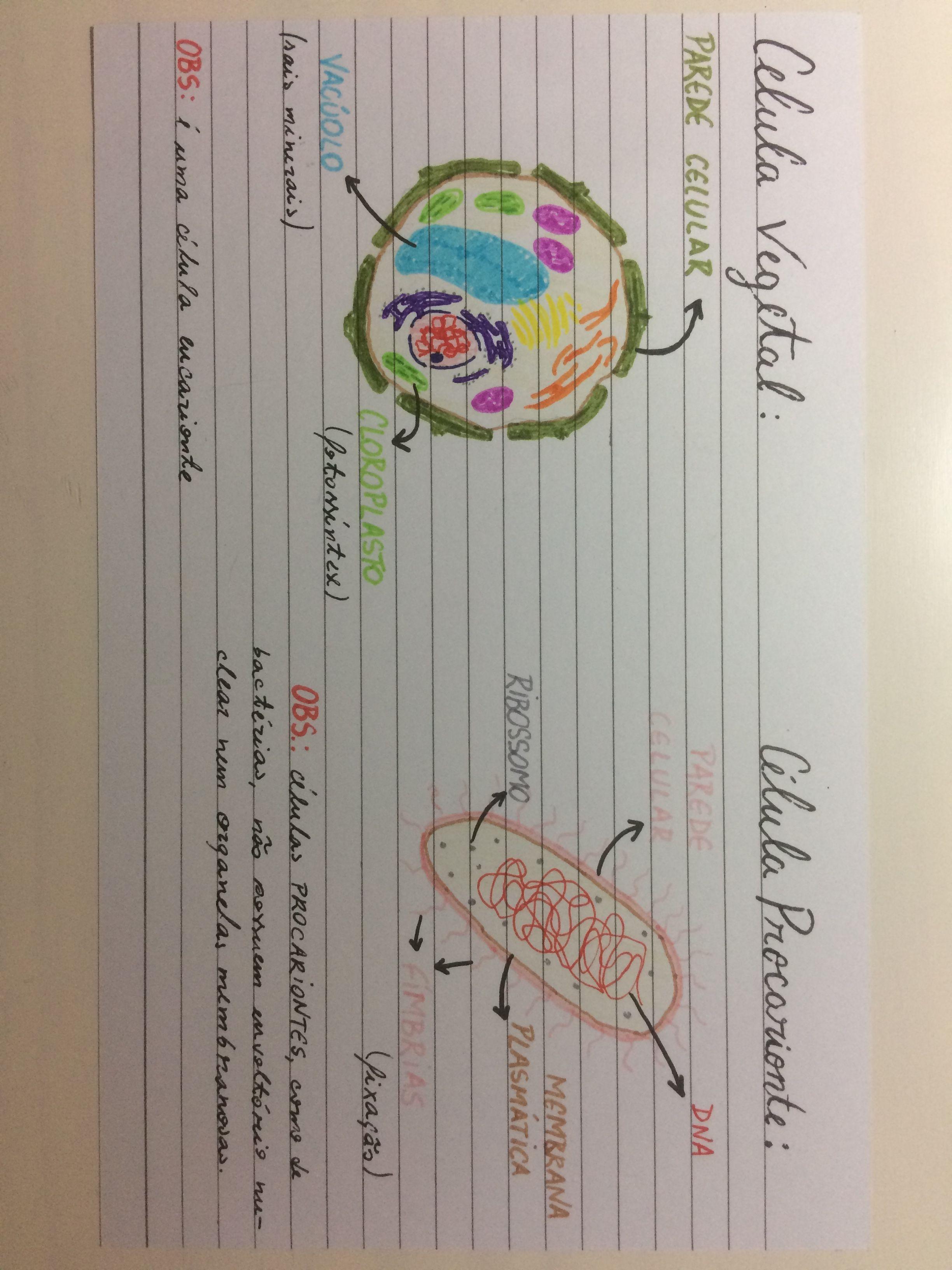 Biologia Celulas Celula Vegetal Celula Procarionte