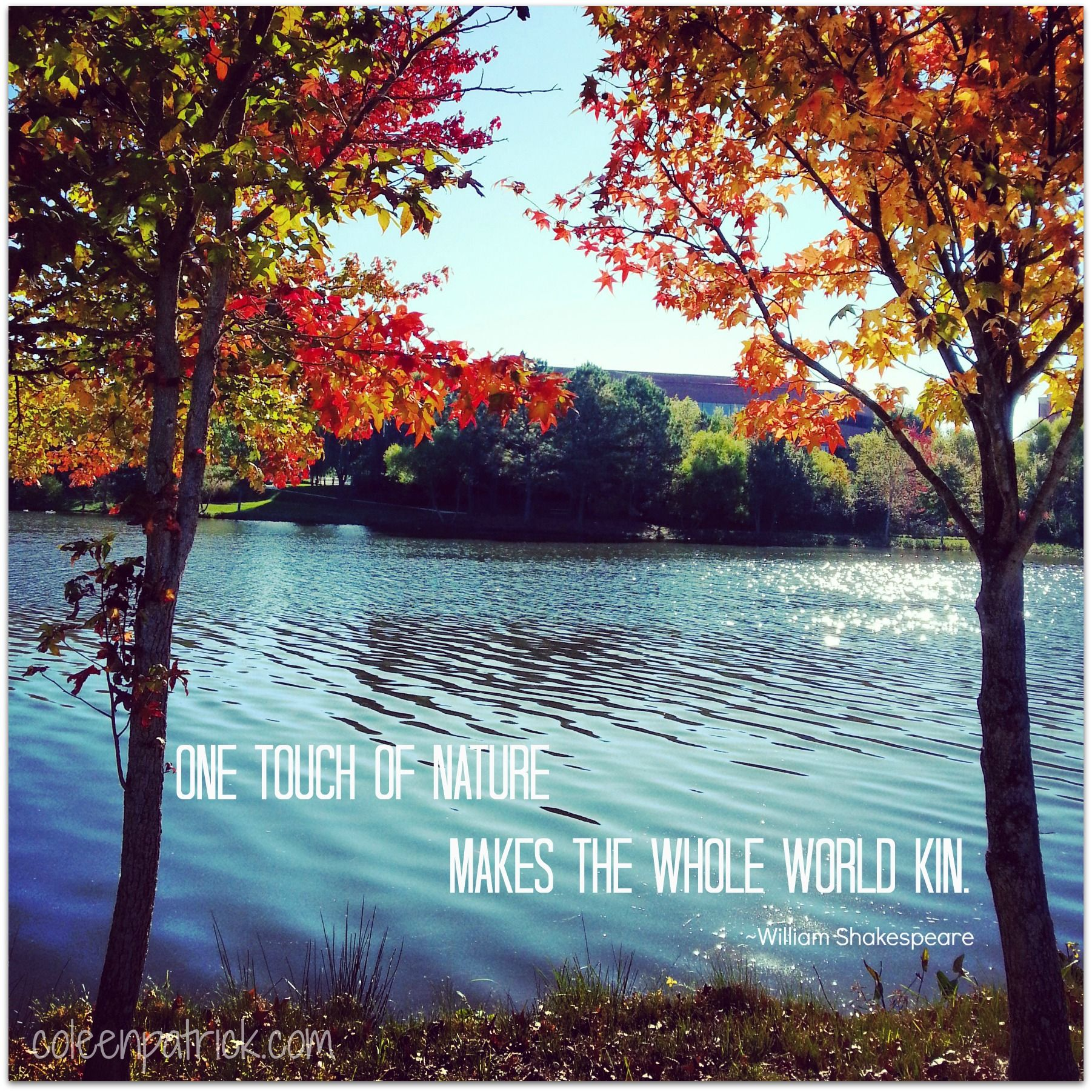 One Touch Of Nature Makes The Whole World Kin Shakespeare Quote