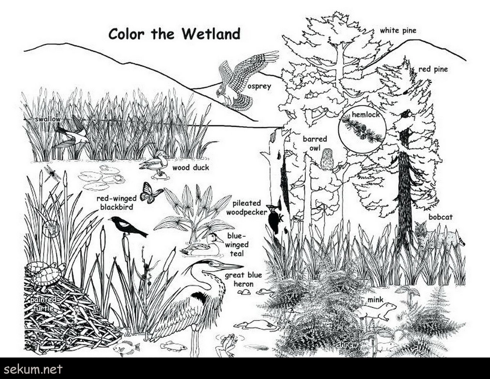 Wetland Plants And Animals Coloring Page Wetland Animal Habitats Coloring Pages