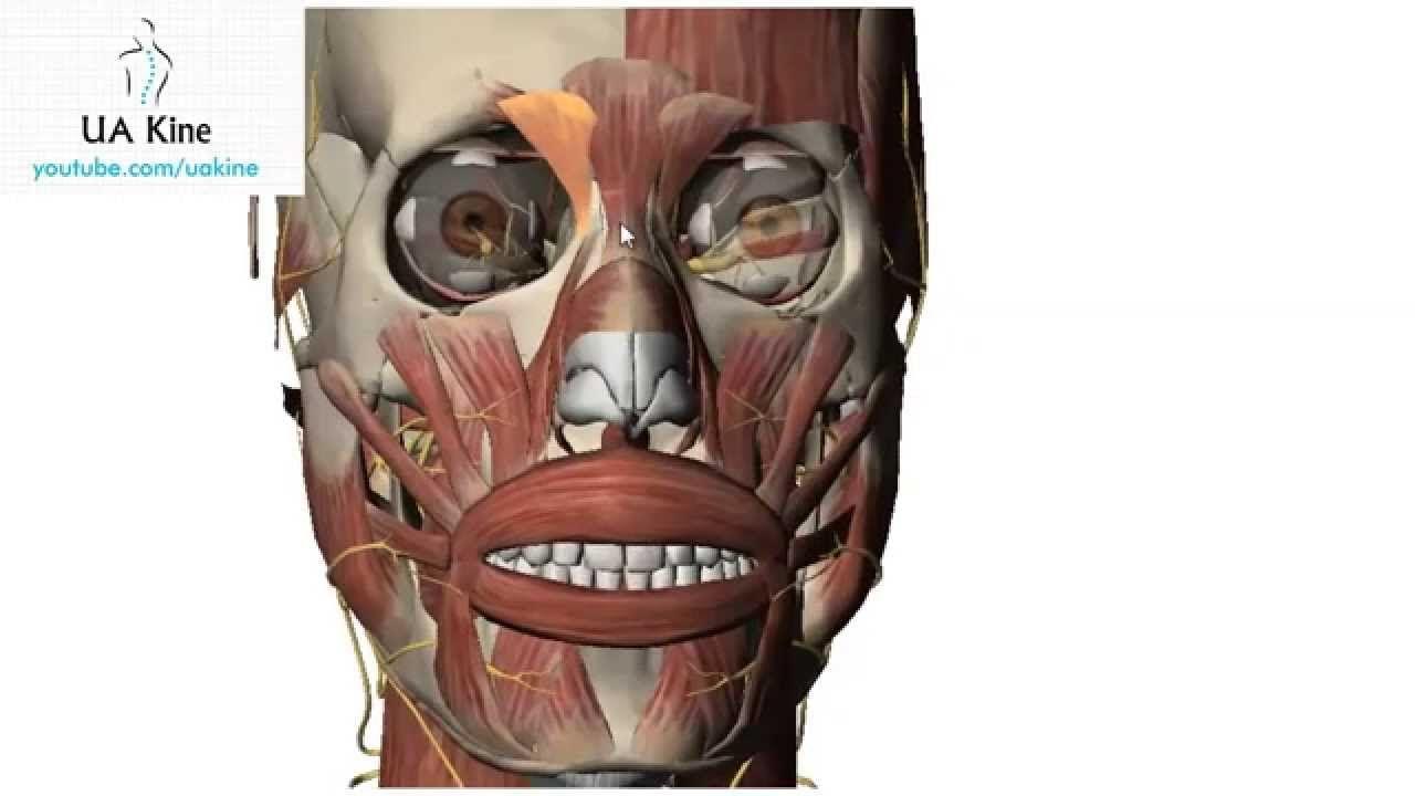 Lujo Grises Anatomía S07e01 Colección de Imágenes - Anatomía de Las ...