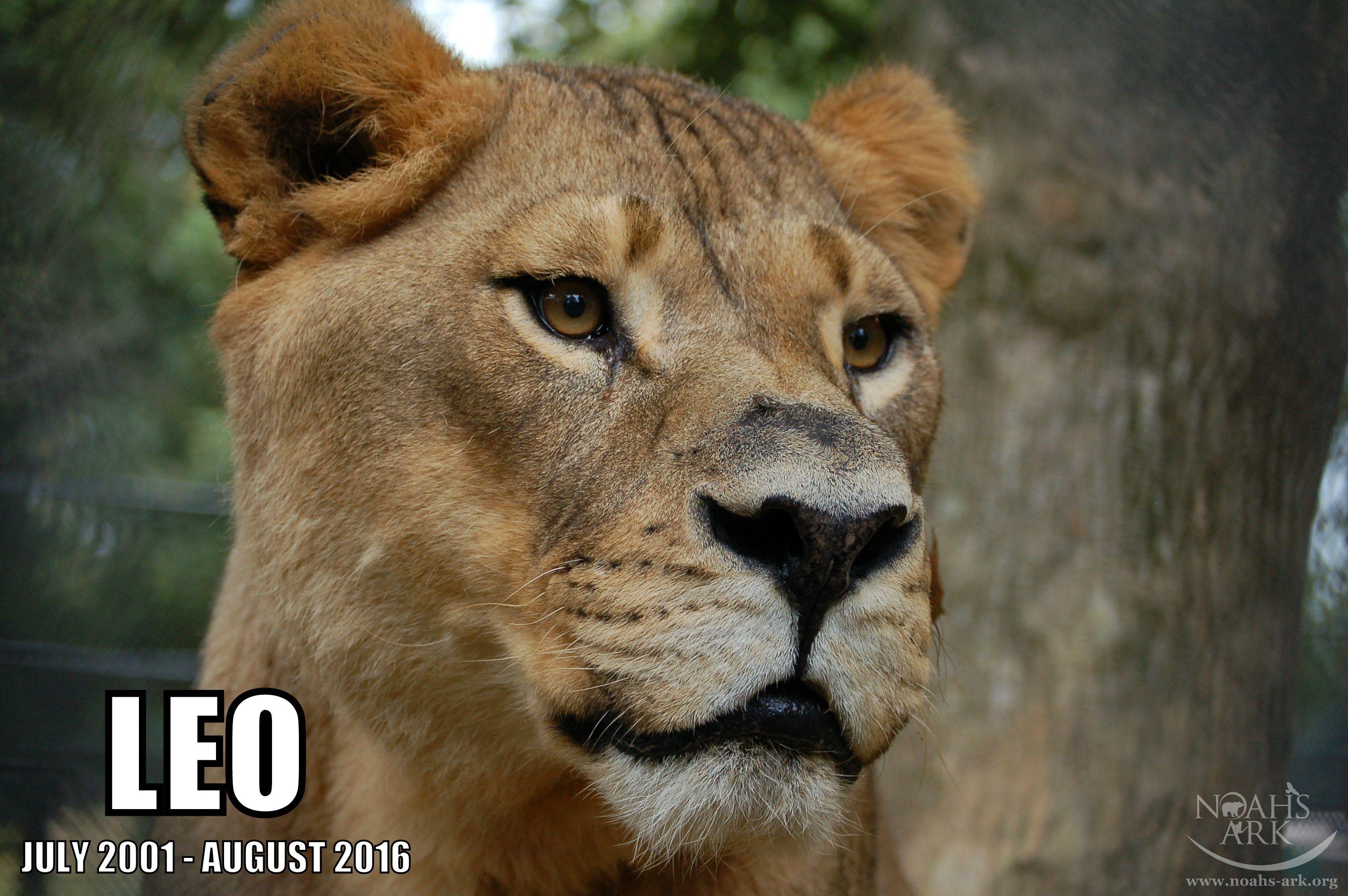 August Newsletter Noah's Ark News Lion, Animals, Leo lion