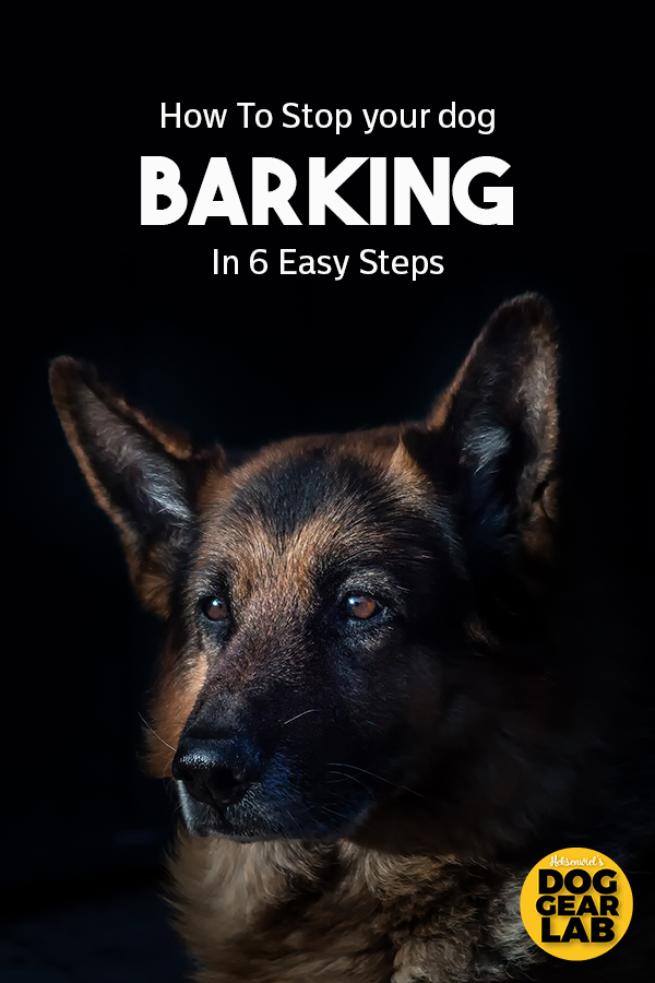 How To Stop A Dog From Barking When You Leave House Dog Training Tips Dog Training Obedience Dog Training Barking