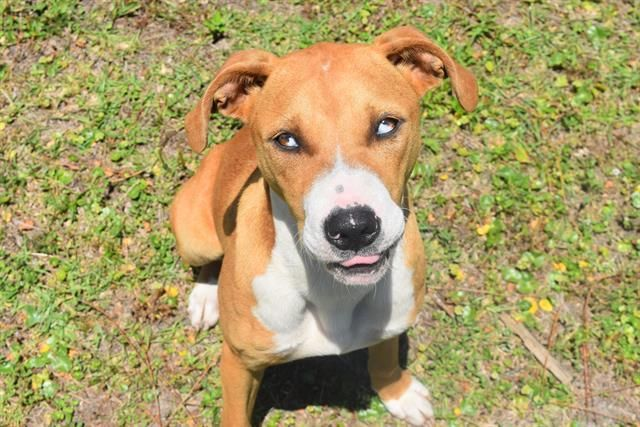 Adopt Dalee On Animal Control Panama City Panama Bay County
