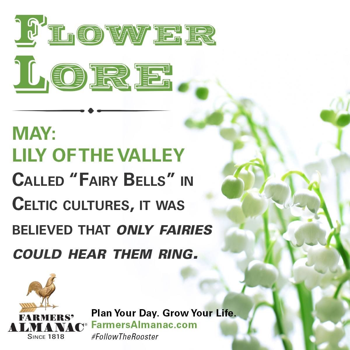 Pin by Meredith Seidl on Birth Lore/Flower Lore/Meanings