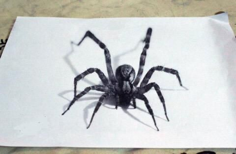 3d Spider Drawing Art Illustrations 3d Art Drawing