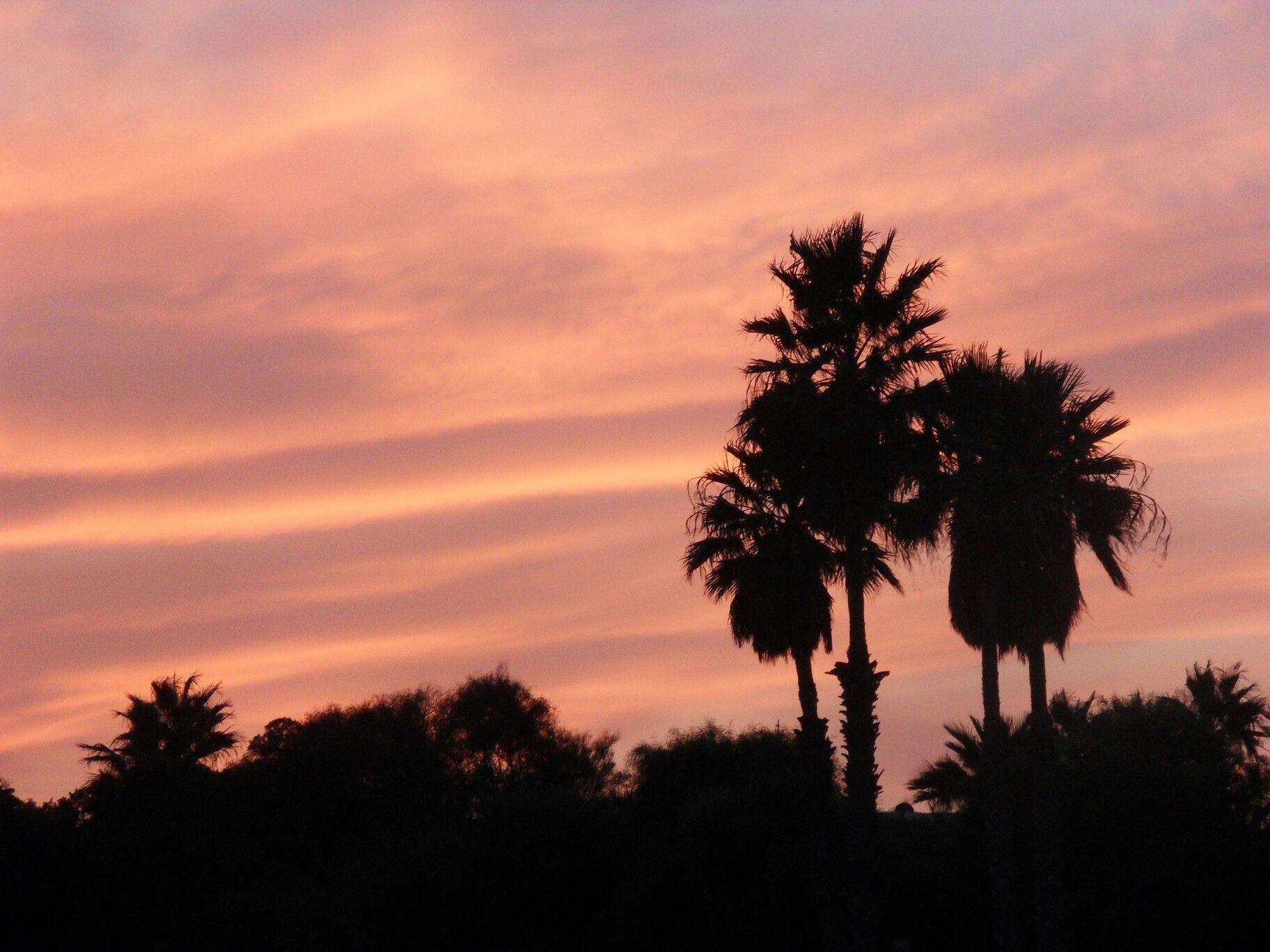 Tree sunset palm beach