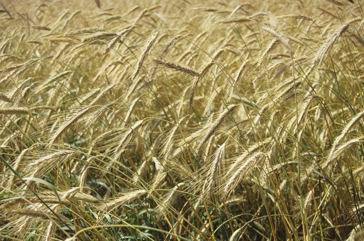 What Is a Cover Crop and How Is It Used on a Small Farm