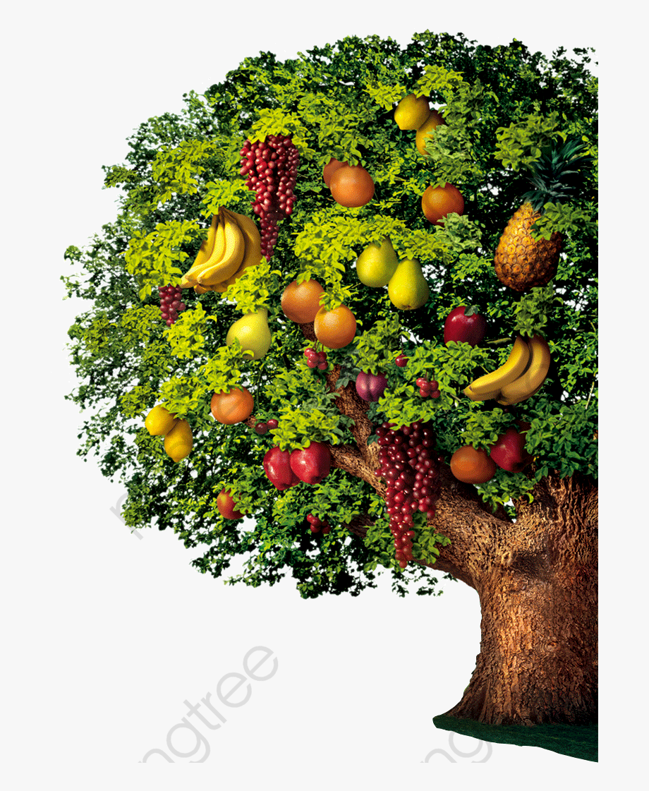 Download Fruit Clipart Variety Of Tree With Fruits Png To Explore More Related Cliparts Cartoons On Netclipart Fruit Clipart Fruit Oak Tree Drawings