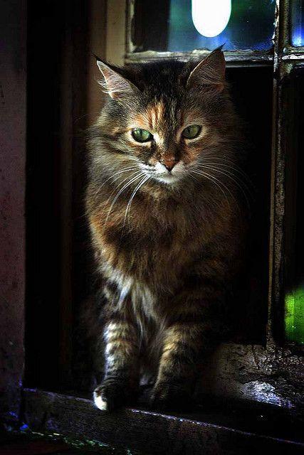 Ginger 2 Hello Kitten Animals Kittens
