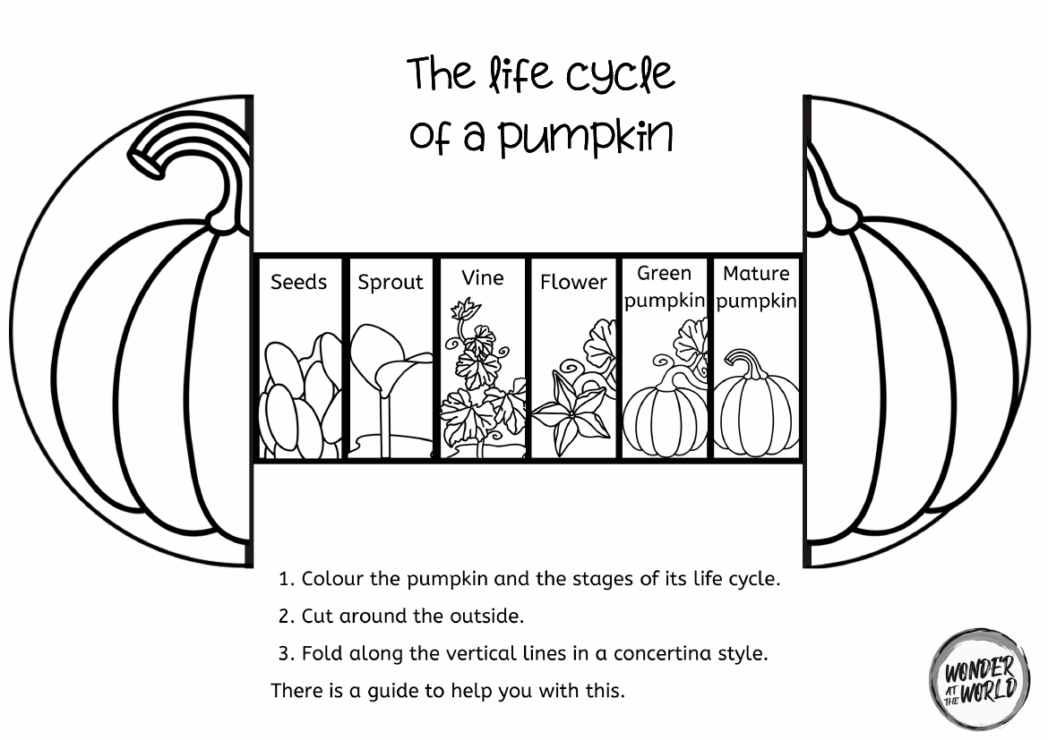 Life Cycle Of A Pumpkin Foldable Craft Teaching Resources Plant Life Cycle Life Cycles Plant Life Cycle Worksheet [ 827 x 1170 Pixel ]