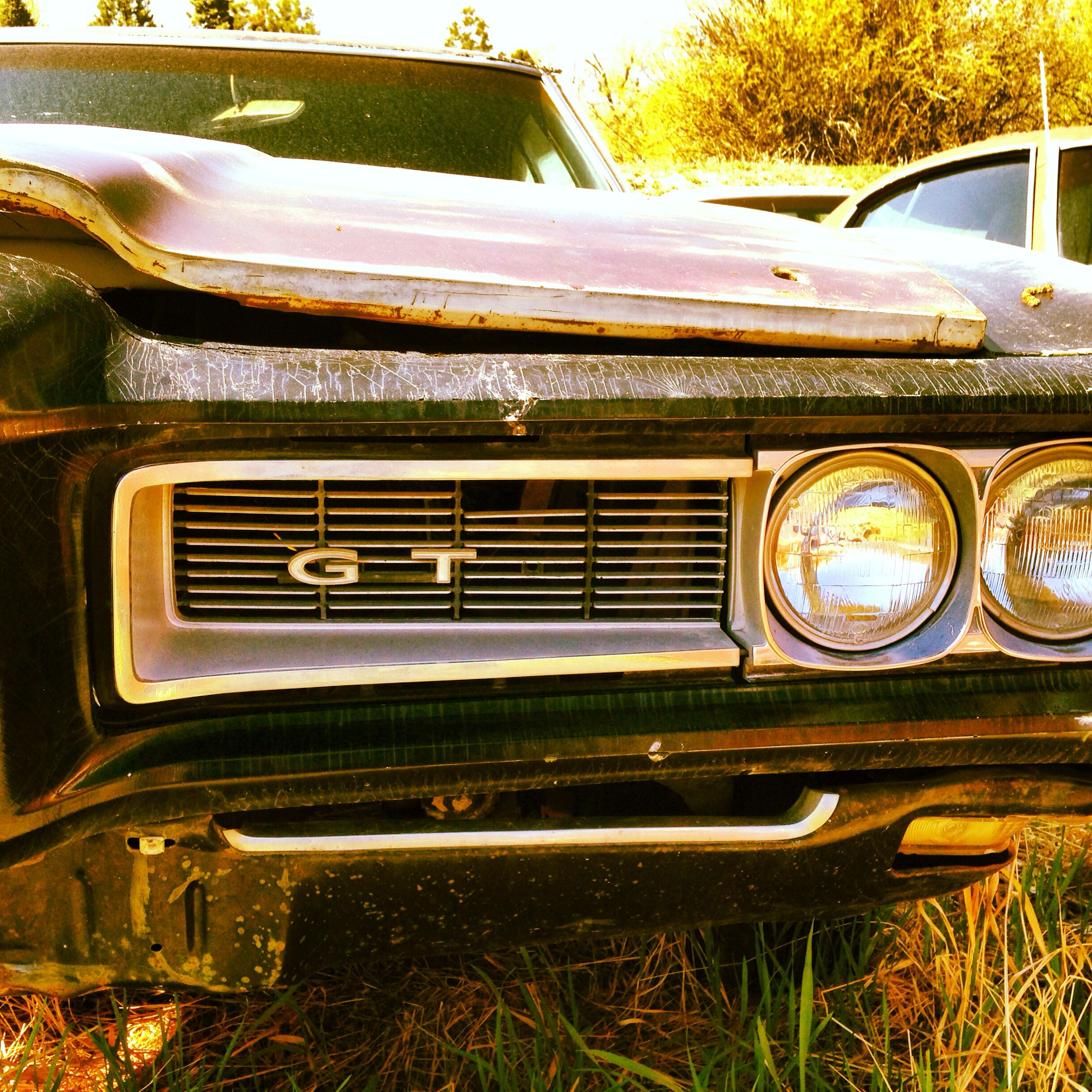 Old GTO front grill near Salmon, ID