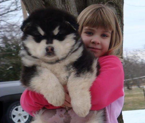 1 Newfoundland Puppy Source 2 Alaskan Malamute 3 Black Chow